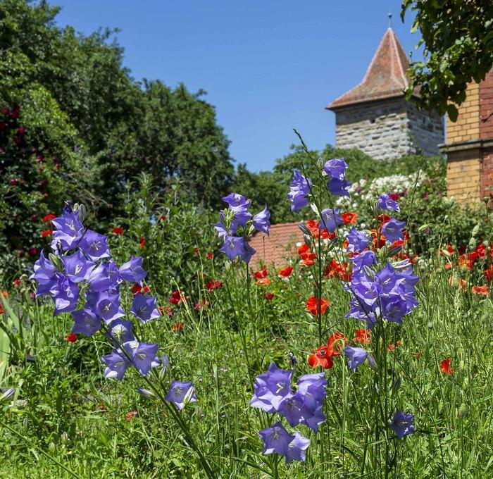 Private Gartenparadiese in Rothenburg ob der Tauber - Rothenburger öffnen ihre Privatgärten