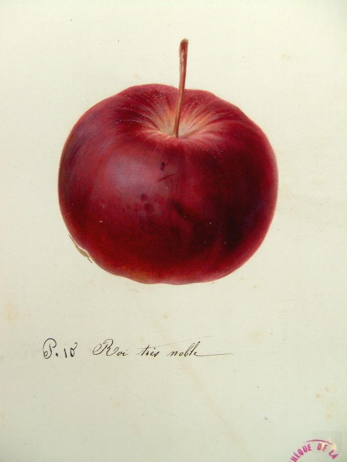 Reconnaissance de pommes à Loguénolé