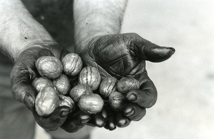 Journées du patrimoine 2019 - Exposition ; Les 80 ans de la noix de Grenoble