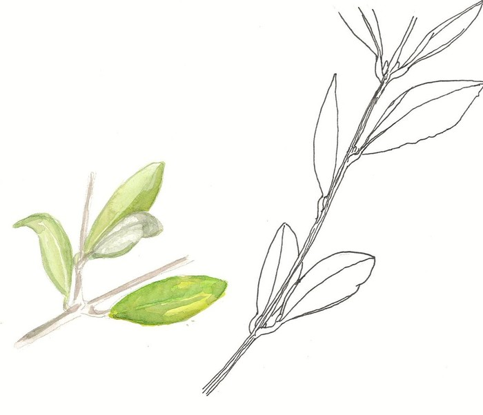 Journées du patrimoine 2020 - Annulé | Atelier de dessins botaniques