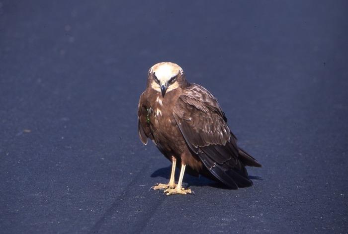 Journées du patrimoine 2019 - Sur les traces d'Audubon, de la Gerbetière au marais