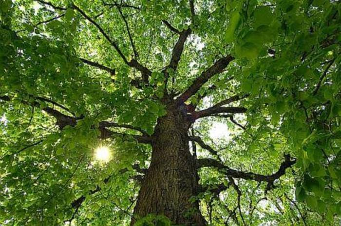 Balade naturaliste : arbre, mon ami !