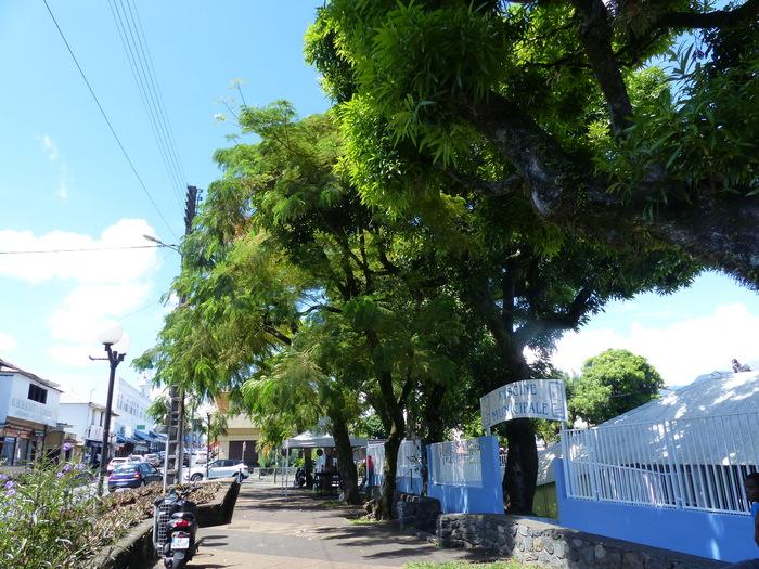 Journées du patrimoine 2019 - L'inventaire des arbres remarquables de La Réunion : Balade-photo autour des arbres du centre-ville de Saint-André