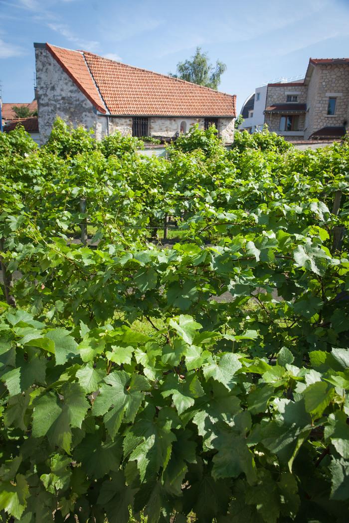 Journées du patrimoine 2019 - Visite des vignes et de la grange de Clamart