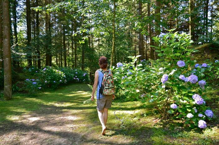 Journées du patrimoine 2020 - Visite du Parc à l'anglaise de La Cude