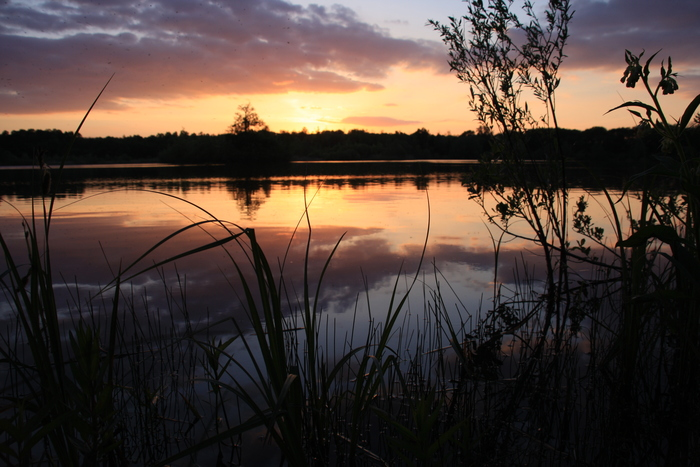 Découverte nocturne du plan d'eau de la Cocharde