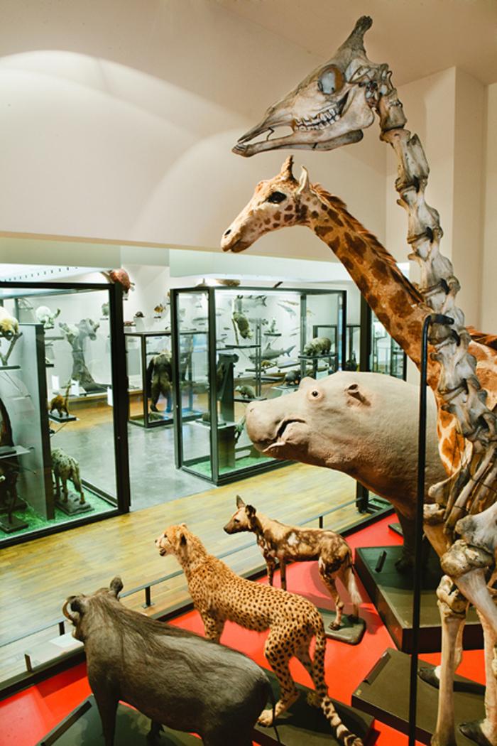 Journées du patrimoine 2020 - Découverte en fanfare du Muséum-Aquarium de Nancy!