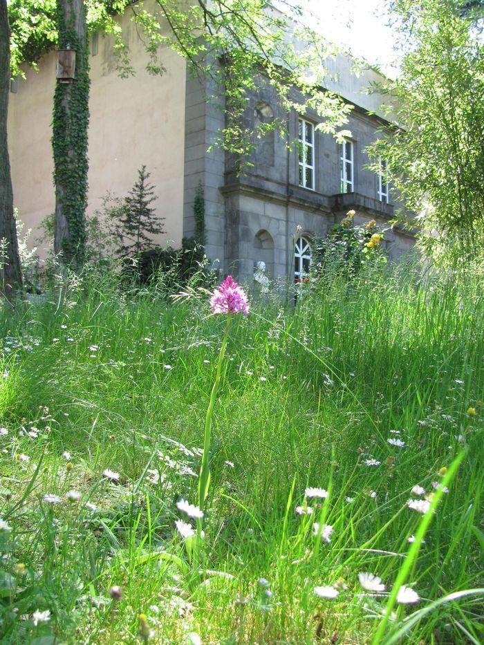 Journées du patrimoine 2020 - Découvrir les réserves de zoologie, de géologie, de botanique, la maison d'Henri-Lecoq et des instruments scientifiques pédagogiques