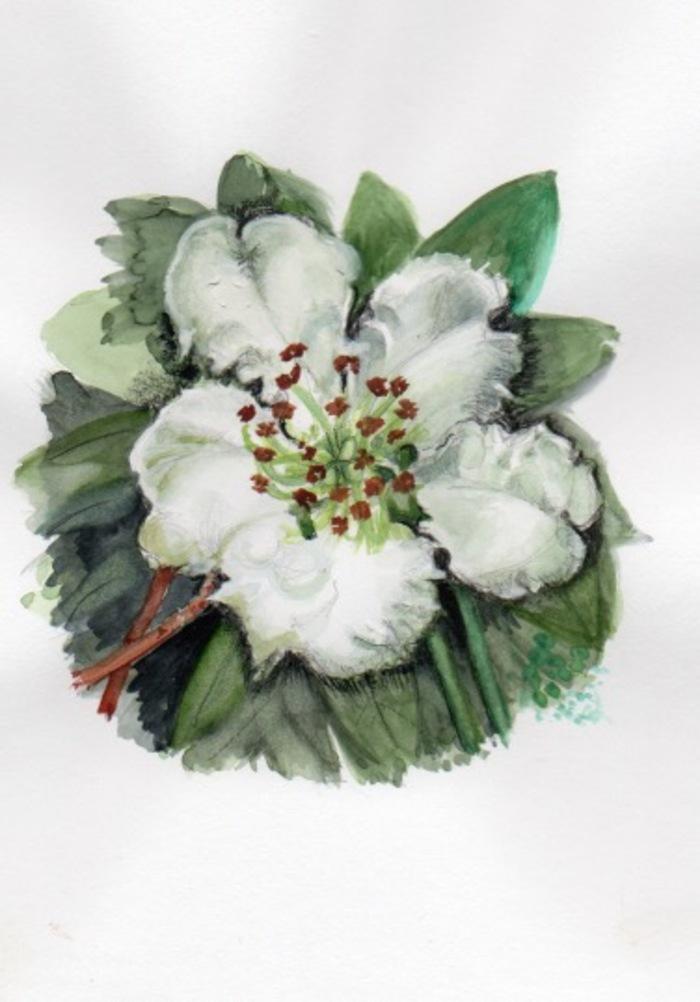 Journées du patrimoine 2020 - Exposition d'aquarelles documentaires sur les arbres de nos plantations bocagères
