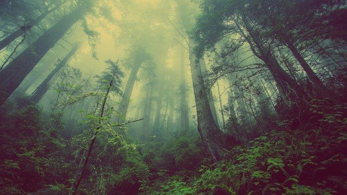 Calculer votre impact sur la forêt en fonction de vos choix de vie et comprendre le cycle et l'intérêt de ces poumons verts.