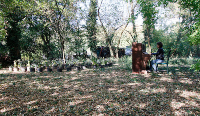 Fête de la musique 2019 - Guillaume Barth, une Nouvelle Forêt