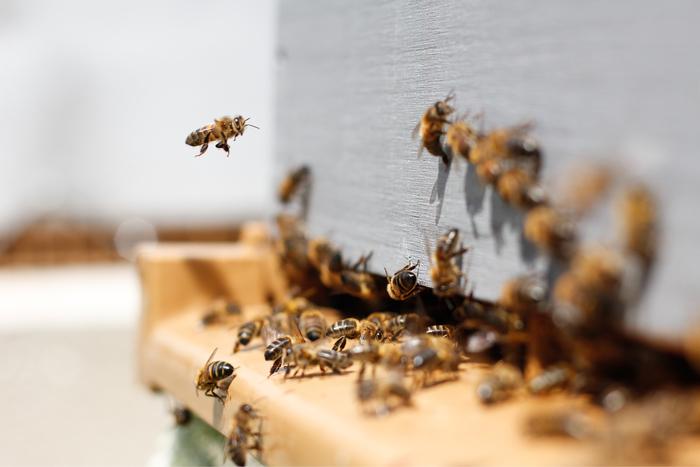 Semaine de l'abeille à la médiathèque