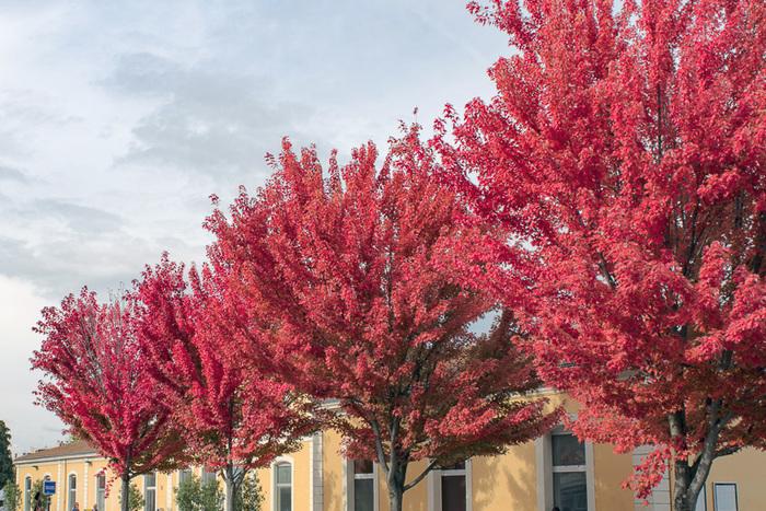 Journées du patrimoine 2020 - Les arbres voyageurs s'arrêtent à Romans