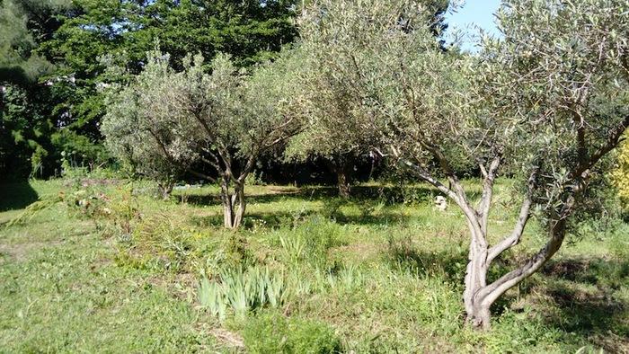Journées du patrimoine 2020 - Annulé   Visite botanique du parc Bortoli et de la collection variétale d'oliviers