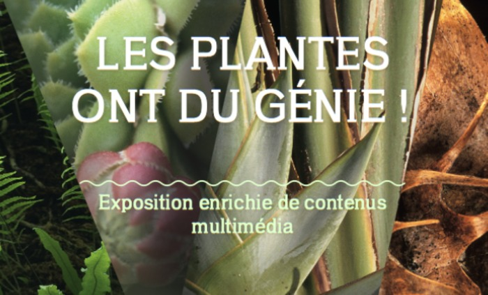 Les plantes ont du génie, © Editions Synops-Goetgheluck