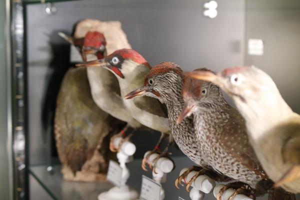 Nuit des musées 2019 -Visite commentée du Musée Ornithologique Charles Payraudeau