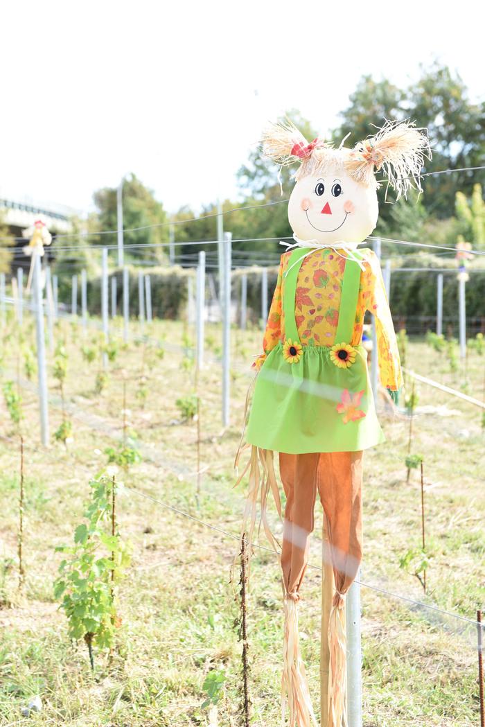 Journées du patrimoine 2019 - Ouverture des vignes Polangis