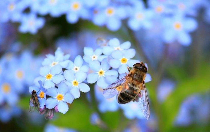 Balade // Même les mouches aiment les fleurs avec Monde de sens