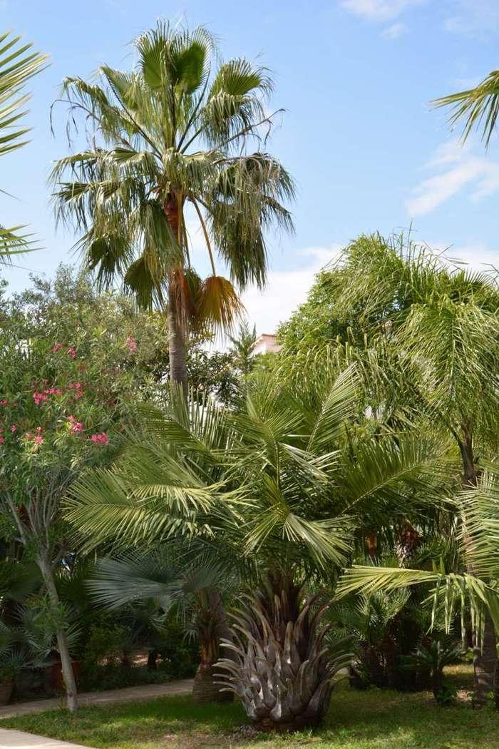 Journées du patrimoine 2019 - Le jardin aux mille et un palmiers