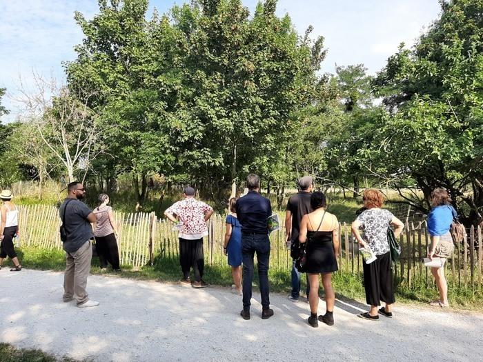 BALADE / Le Parc des Beaumonts : des plantes sauvages qui soignent et qui se mangent - balade botanique