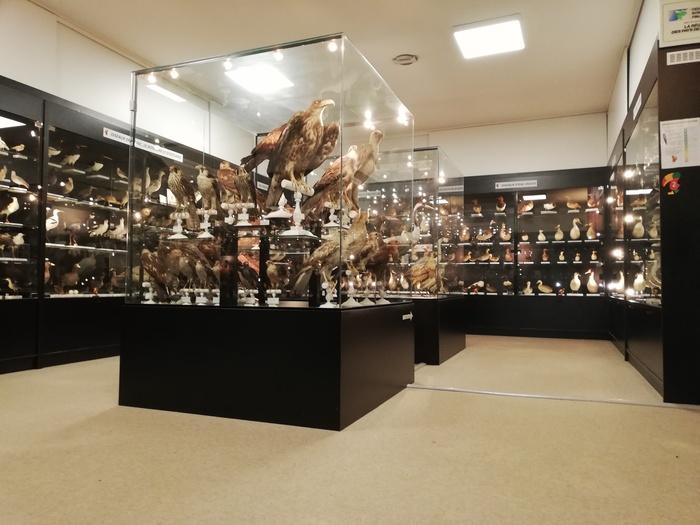 Journées du patrimoine 2020 - Musée Ornithologique Charles Payraudeau