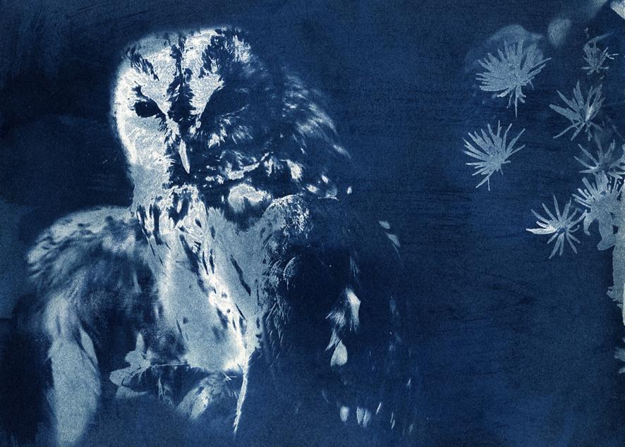 L'Atelier du Cartonnage vous invite à découvrir l'exposition de cyanotypes d'Estelle Ogura.