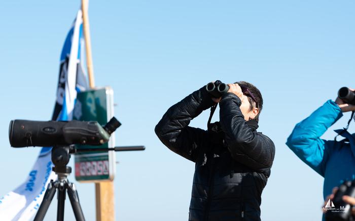 Journées du patrimoine 2019 - Observation de la migration des oiseaux à la Pointe de l'Aiguillon