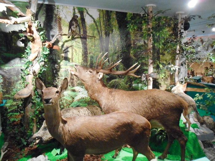 Journées du patrimoine 2020 - Visite du Musée de la nature