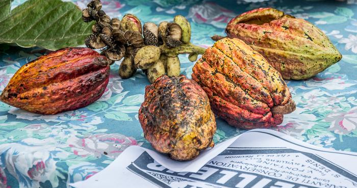 Journées du patrimoine 2019 - L'Atelier Cacao Péi