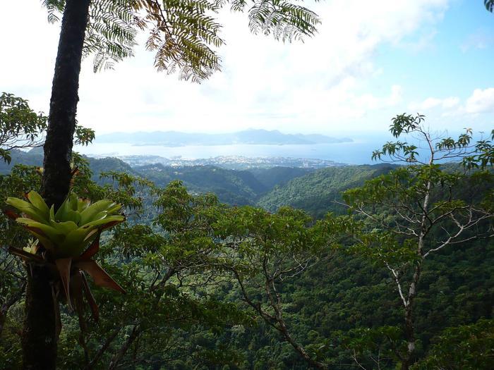Journées du patrimoine 2020 - FdF / J'apprends à connaitre les arbres des forêts