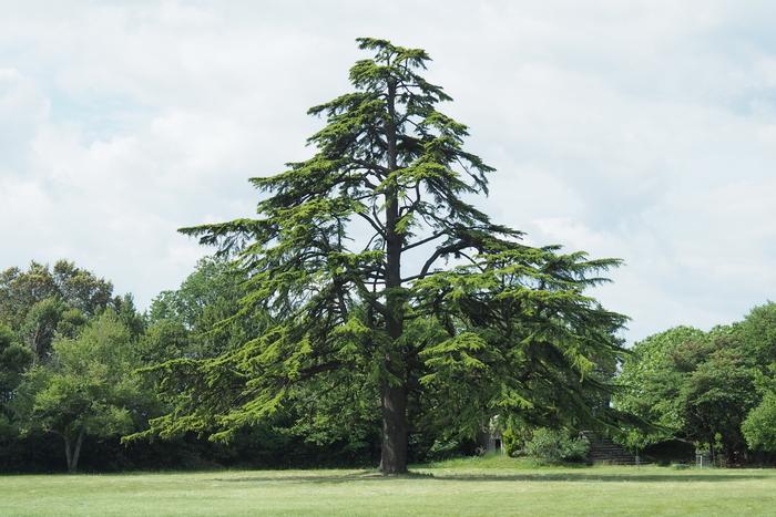 Journées du patrimoine 2019 - Pierrelatte et son patrimoine arboricole