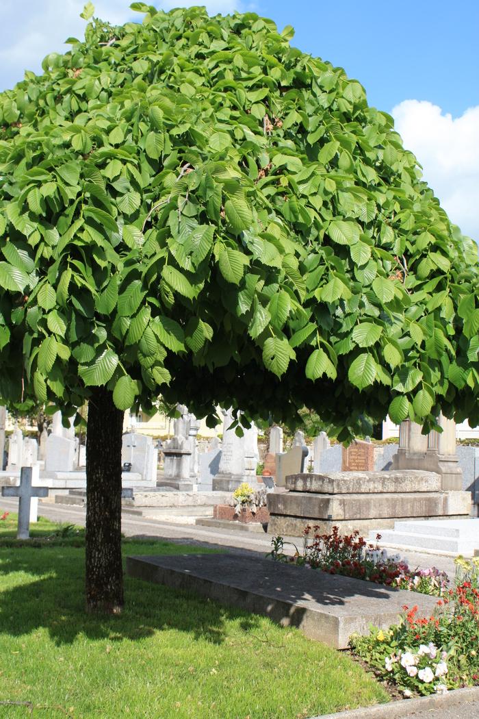 Journées du patrimoine 2020 - Visite guidée - Le cimetière de Loverchy : mémoires de pierres