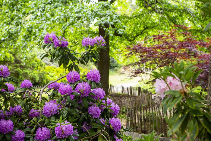Journées du patrimoine 2020 - « Le parc André-Malraux, sa gestion et son entretien » par Alain Sénicourt, Responsable des parcs Malraux/Baumel et de la décoration florale