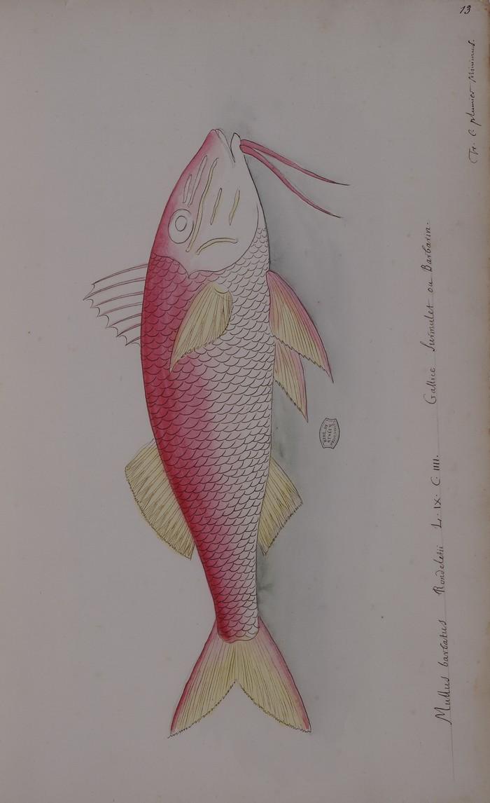 Journées du patrimoine 2019 - À la découverte des poissons de France et des Antilles