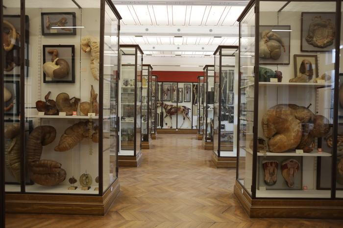 Journées du patrimoine 2020 - Visite libre du musée Fragonard de l'École vétérinaire de Maisons-Alfort