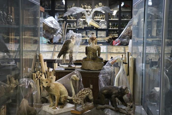 Journées du patrimoine 2020 - Découvrez les coulisses des Musées