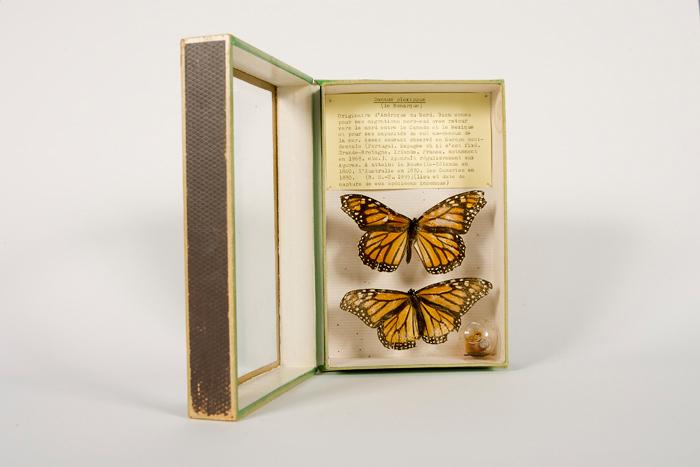 Journées du patrimoine 2020 - Patrimoine universitaire - Visite guidée de la collection de zoologie