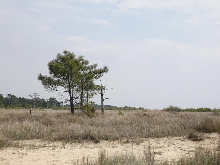 Journées du patrimoine 2020 - Visite guidée de la réserve naturelle nationale des prés salés