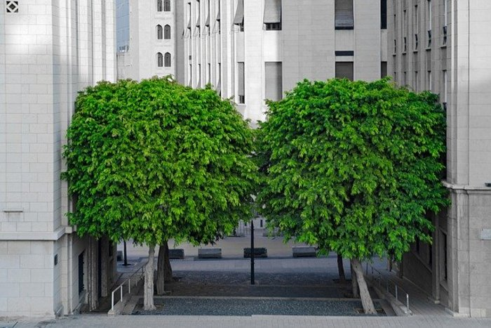 Végétaliser les villes, une nécessité ?