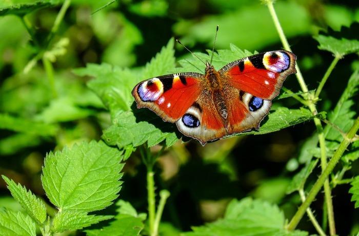 Un atelier pour comprendre pourquoi les insectes sont indispensables aux jardiniers. Vous partiez à la rencontre de ceux du jardin de la Maison de la Nature et de l'Arbre.