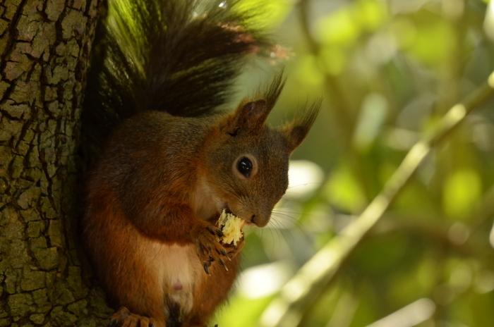 Les écureuils du Parc rivière