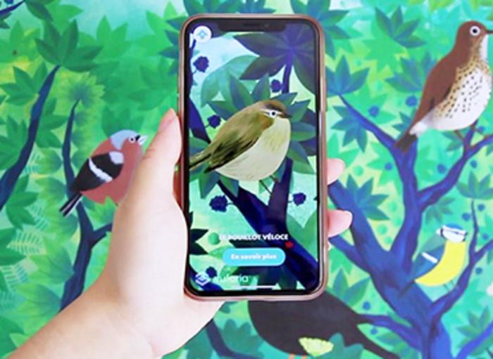 Observons les oiseaux