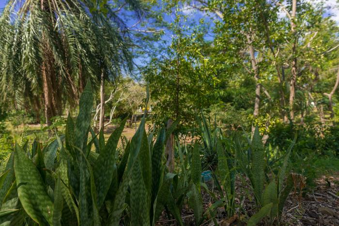 Journées du patrimoine 2019 - Les arbres du jardin botanique en Quizz