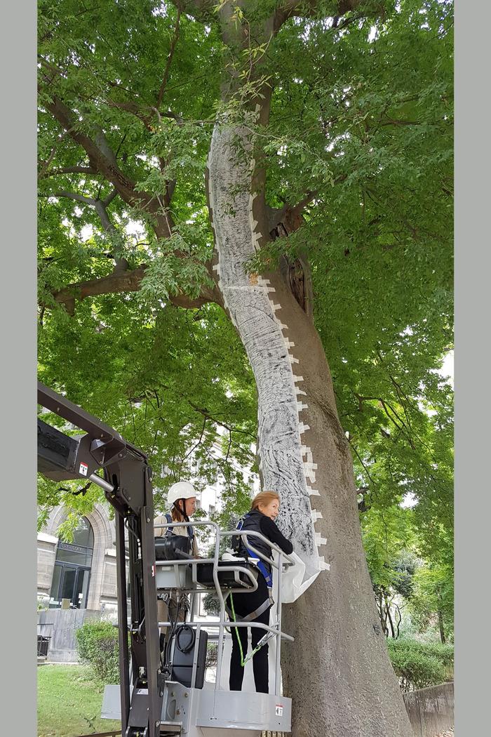 Journées du patrimoine 2020 - Performance artistique autour d'une allée d'arbres