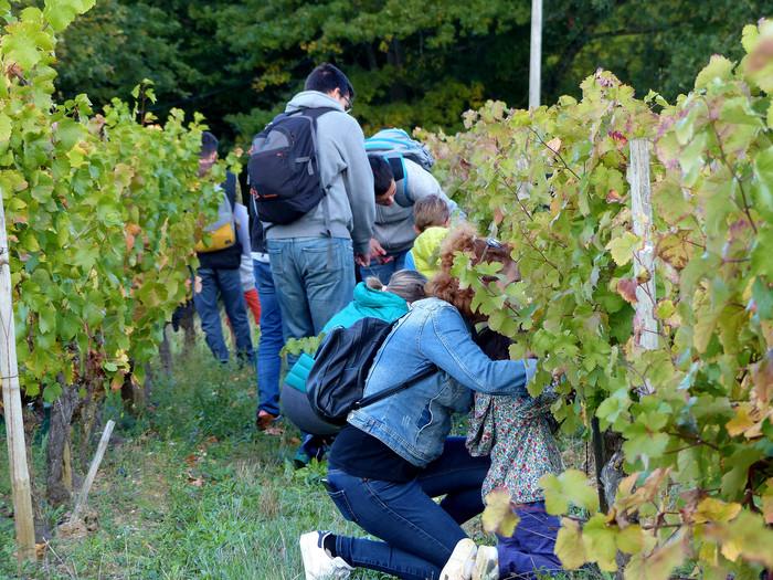Journées du patrimoine 2020 - Vendanges et jus de raisin