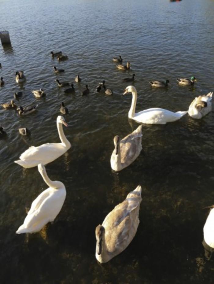 Journées du patrimoine 2019 - Balade guidée au parc de la Plage Bleue