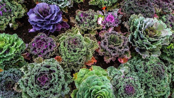 Quelques plantations résistent au grand froid. Découvrez ces irréductibles légumes à qui l'hiver ne fait pas peur.