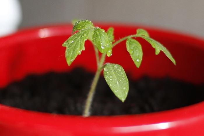 C'est le printemps ! Venez découvrir comment créer ses semis et comment associer ces plantes pour qu'elles se protègent naturellement !