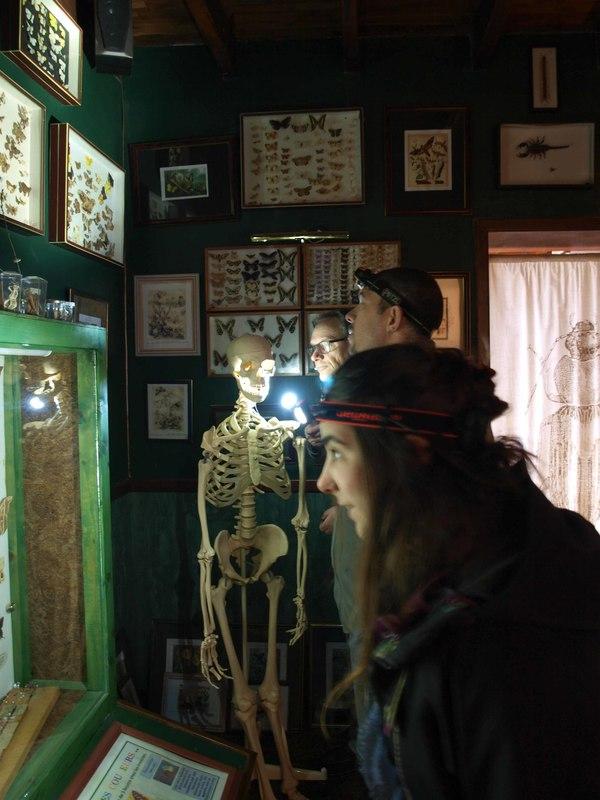 Nuit des musées 2019 -Une nocturne en tête-à-tête à la lampe torche avec les insectes !