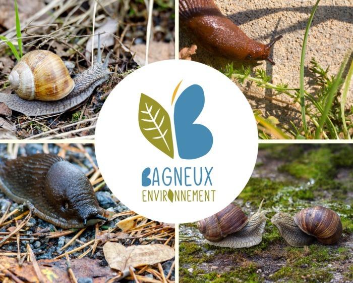 Les P'tits Ateliers Nature : Les escargots et les limaces